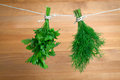 Fresh herbs parsley and dill hanging over wooden background Stock Images