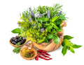 Fresh herbs and spices dill, basil, sage, lavender, laurel, oliv Royalty Free Stock Photo