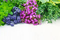 Fresh herbs variety of including thyme basil lavender sage rosemary Stock Photo