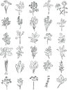 Fresh herbs vector collection of in line art Stock Image