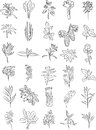 Fresh herbs vector collection of in line art Stock Images