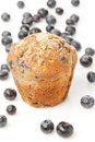 Fresh Homemade blueberry Muffin Royalty Free Stock Photo
