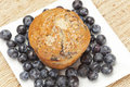 Fresh Homemade blueberry Muffin Royalty Free Stock Photography