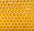 Fresh honey in the comb Royalty Free Stock Photos