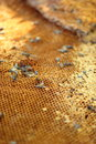 Fresh honey in the comb background Royalty Free Stock Photo