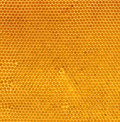 Fresh honey in comb natural texture Royalty Free Stock Photo