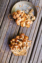 Fresh honey fungus Stock Images