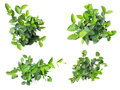 Fresh of house plants top view isolated on white background Royalty Free Stock Photo