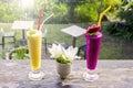 Fresh jackfruit juice and dragon fruit juice with garden background Royalty Free Stock Photo