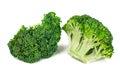 Fresh Juicy Green Broccoli on White Background Royalty Free Stock Photo