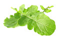 Fresh juicy leaves of rucola Stock Image