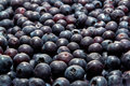 Fresh and Juicy Natural Organic Blueberries Royalty Free Stock Photo