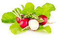 Fresh juicy radish with green leaves on white background Stock Image