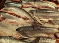 Fish market King Salmon Royalty Free Stock Photo