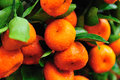 Fresh kumquats Stock Photo