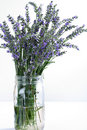 Fresh lavender in glass jar on white vertical Stock Images