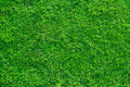 Fresh lawn grass background Royalty Free Stock Photos
