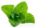 Fresh leaf mint Royalty Free Stock Photo
