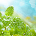 Fresh leaves with water drops Stock Image