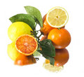 Fresh lemon and orange fruits Royalty Free Stock Photography