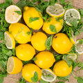 Fresh lemons with green salad leaves Royalty Free Stock Photo