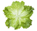 Fresh lettuce leaves isolated on white background Stock Photography