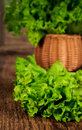 Fresh lettuce leaves in a wicker basket Stock Photography