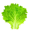 Fresh Lettuce / One Leaf Isola...