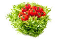 Fresh lettuces salad with fresh tomatoes on white background Royalty Free Stock Photography