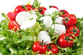 Fresh lettuces salad with red fresh tomatoes and italian cheese mozzarella Royalty Free Stock Photos