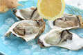 Fresh light steamed oysters on ice very Stock Photos
