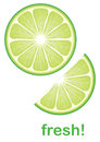 Fresh lime green vector detailed image Royalty Free Stock Photo
