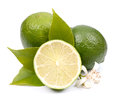 Fresh limes on white ground Royalty Free Stock Images