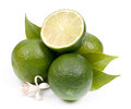 Fresh limes on white ground Stock Photography