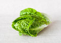 Fresh little gem salad closeup image of green lettuce on light fabric background Stock Photos