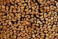 Fresh logs Royalty Free Stock Photo