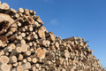 Fresh logs stack of Royalty Free Stock Images