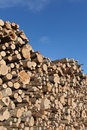 Fresh logs stack of Royalty Free Stock Photo