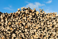 Fresh logs stack of Stock Image