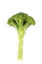 Fresh long and lean broccoli in closeup on white background Royalty Free Stock Photos