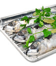 Fresh mackerel fish with parsley on the aluminium foil tray isolated white Royalty Free Stock Photos