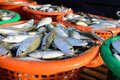 Fresh mackerel fishes in the plastic basket for sale Royalty Free Stock Photography