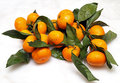 Fresh mandarin with leaves image Royalty Free Stock Photo