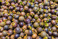 Fresh mangosteen on of the most famous tropical fruit Stock Photos