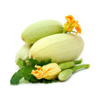 Fresh marrow with flower and leaf on white Stock Photos