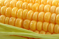 Fresh mealie and dewdrops Stock Photos