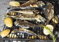 Fresh Mediterranean fishes on BBQ Stock Images