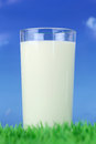 Fresh milk in a glass on green meadow front of blue sky Stock Image