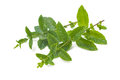 Fresh mint leaves on a white background Royalty Free Stock Image