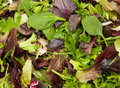 Fresh mix salad Royalty Free Stock Photo